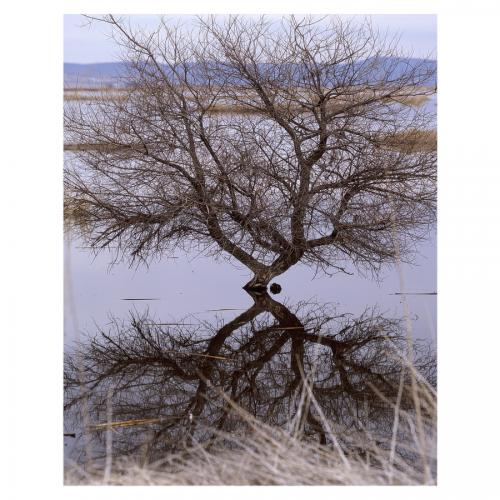 Tree at Lower Klamath